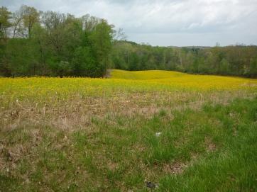 Goldenrod Field